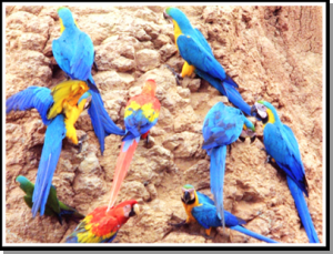papagan-bentonit